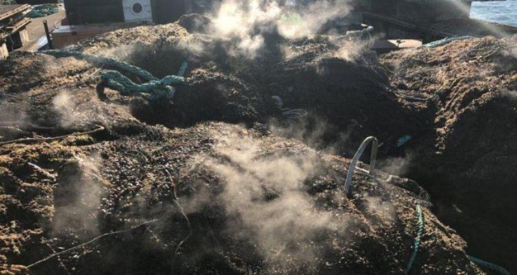 Porciones de las redes se encontraban llenas de mejillones y otras especies marinas. Foto: Seattle Times / Departamento de Recursos Naturales de Washington.