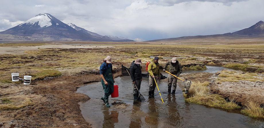Investigación realizada en el río Chungará. De derecha a izquierda en la foto:  Dr. Billy Ernst, Sr. Pablo Rivara, Dr. Caludio Quezada Romegialli y Sr. Gonzalo Salazar. Foto: Pablo Savaria.