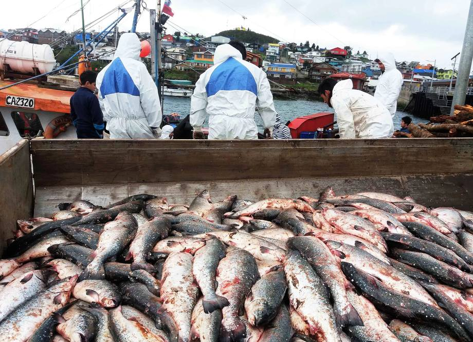 Decomisan 6 toneladas de salmones transportados de forma ilegal ...