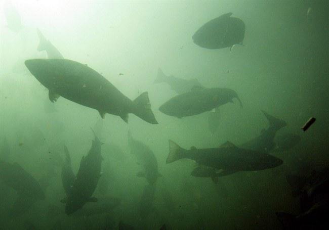 Cultivo de salmónidos. Foto: Archivo Salmonexpert.