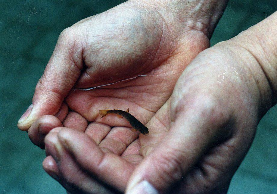 El salmón se encuentra dentro de los 10 alimentos marinos de cultivo preferidos por los consumidores.