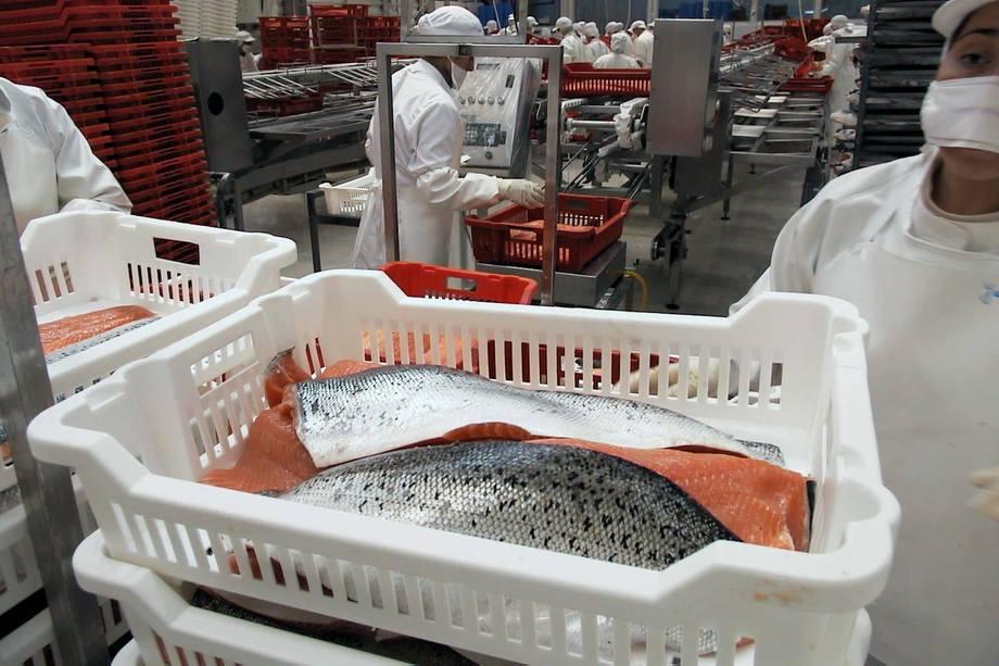 Imagen referencial de salmón fresco. Foto: Archivo Salmonexpert.