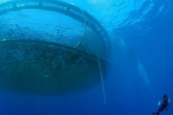 Imagen referencial de acuicultura en mar abierto. Foto: Archivo Salmonexpert.