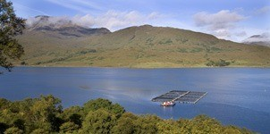Nice weather, shame about the smaller fish: rising water temperatures are not good news for salmon farmers.