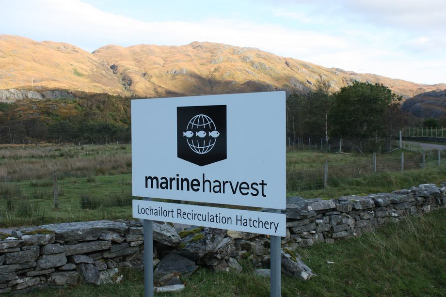 Despite a good performance from freshwater operation, Marine Harvest Scotland continues to suffer from high production costs at sea.