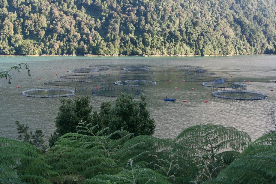 Camanchaca farm in Comau Fjord