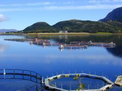 Scotland can learn from Norway's more 'enabling' environment to develop its salmon farming industry