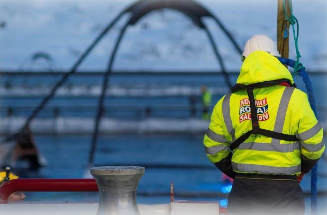 Norway Royal Salmon's profits were dented by ISA. Photo: NRS
