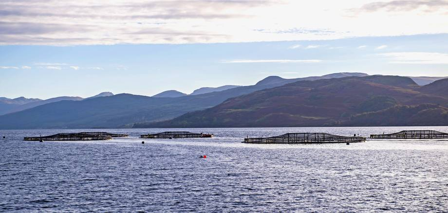 Exports of Scottish salmon grown at sites like this one at Loch Fyne grew by 35% in value and 26% by volume last year. Photo: SSPO