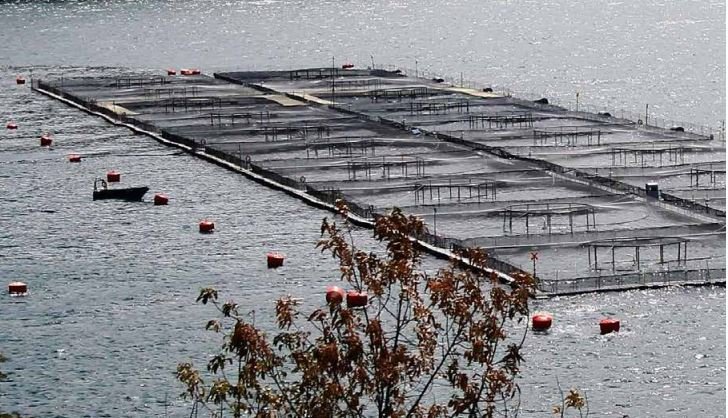 Camanchaca has earmarked US$50m from its share offer for salmon farming. Photo: Camanchaca