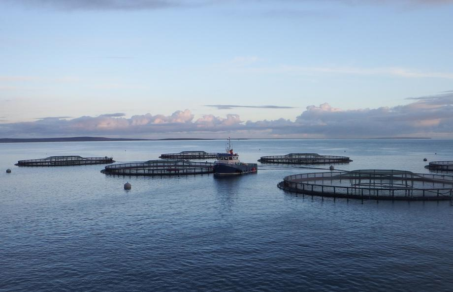Cages supplied by Fusion Marine, one of more than 700 Scottish companies used by SSF in 2017. Photo: Fusion Marine