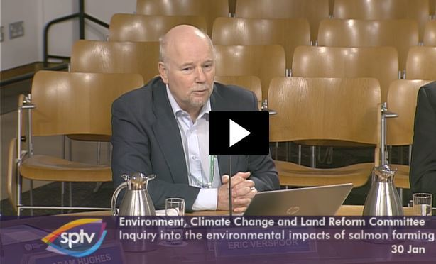 Professor Eric Verspoor gives evidence to the ECCLR yesterday. Video grab: SPTV