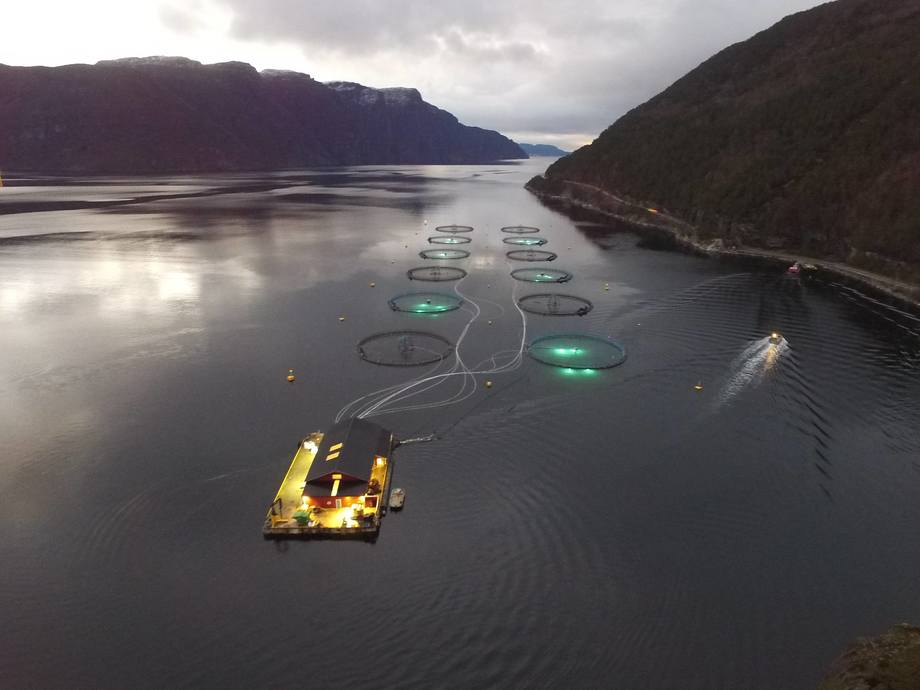 Trials at the Centre for Aquaculture Competence (CAC) site in Vindsvik, Norway, have shown reduced numbers of copepodid and CH1 and 2 lice. Photo: CAC