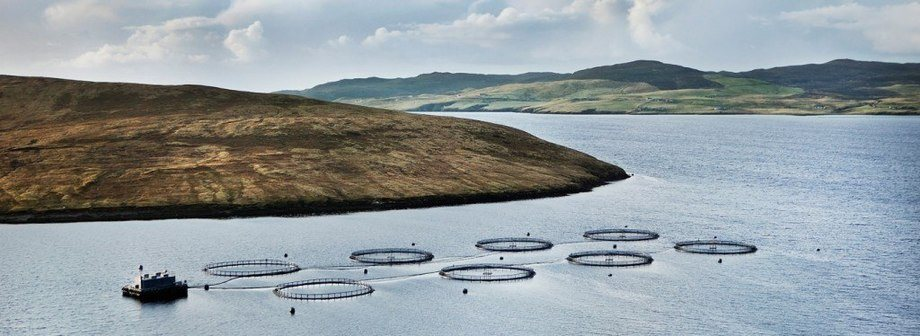 A Grieg salmon farm in Shetland - the company is selling its Scottish business