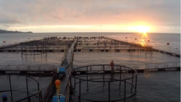 The value of Chilean salmon exports increased by 20% last year. Photo: Camanchaca