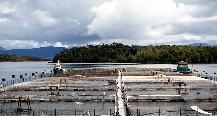 Friosur has more than 40 licences and the potential to produce 80,000 tonnes of salmon annually. Photo: Friosur