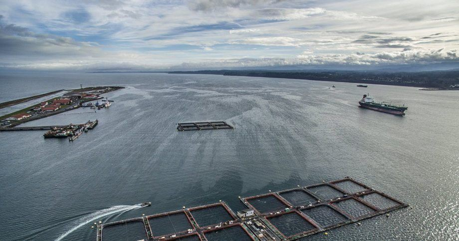Cooke Aquaculture Pacific is challenging a decision to terminate its lease for its Port Angeles farm. Photo: The Seattle Times