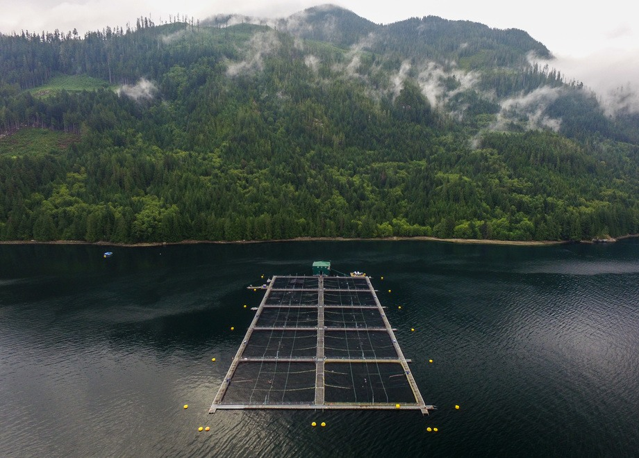 Marine Harvest Canada's salmon farms benefited from high market prices but costs have also risen. Photo: Marine Harvest