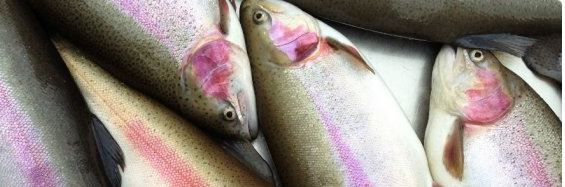 Scotland's leading trout farmer, Dawnfresh, increased turnover and profit margin but still made a loss. Photo: Dawnfresh