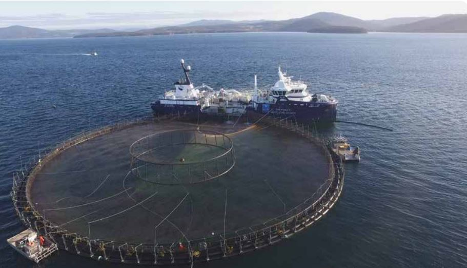 Salmon farming is responsible for the creation of more than 5,000 jobs in Tasmania. Photo: Tasmanian government.