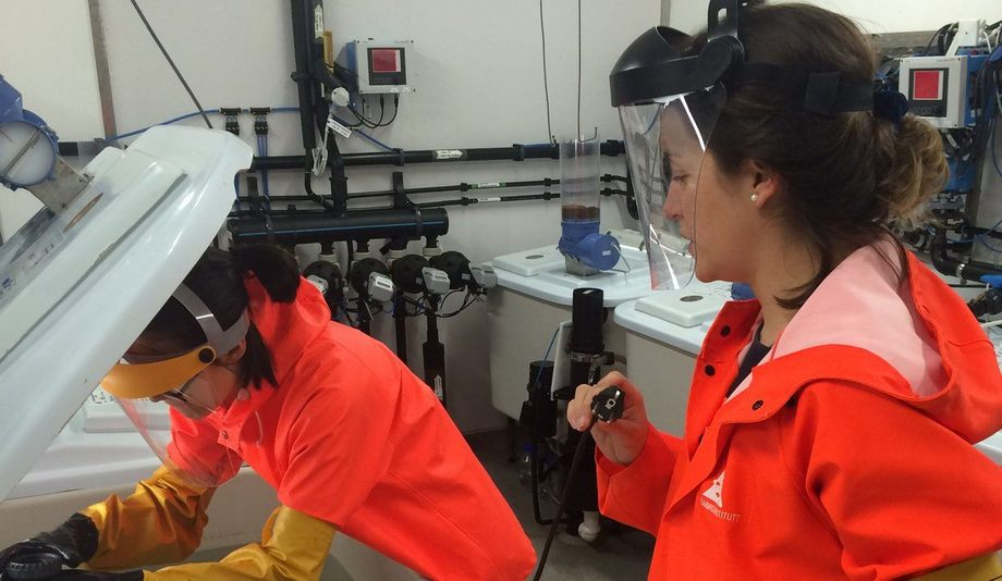 Francisca Samsing and Kathy Overton at IMR, where they are delousing salmon with hydrogen peroxide in sea water with lowered temperature. Photo: IMR