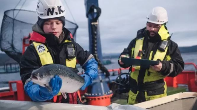 Cermaq has reported better fish health in all the regions it farms in. Photo: Cermaq