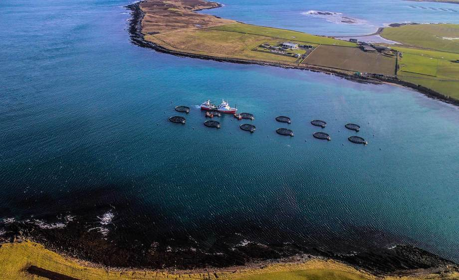 Salmon farmed in Orkney has been named as a 'Good Alerternative' by Seafood Watch. Photo: Cooke Aquaculture Scotland