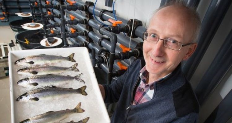 Helge Tveiten has led a team of scientists who have developed a salmon that does not become sexually mature. Photo: Ole Åsheim © Nofima