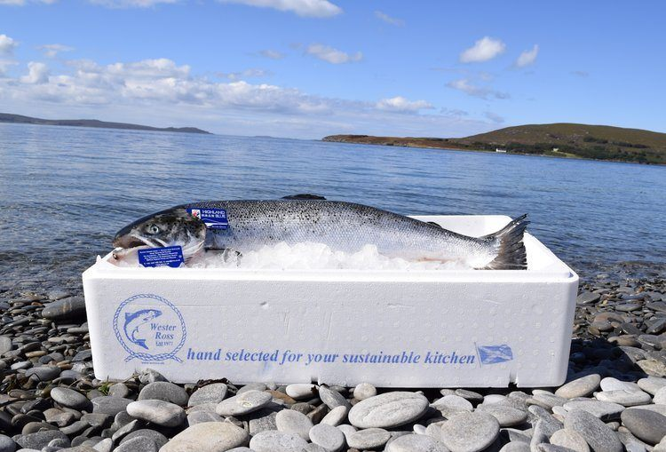 Wester Ross Fisheries Ltd made a post-tax profit of £1.4m in 2016. Photo: Wester Ross Fisheries