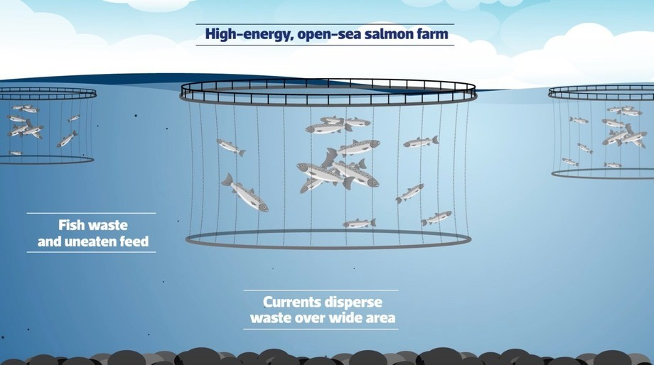 The three-year project will study the benthic impact of salmon farming in high-energy sites. Image: ©SAIC