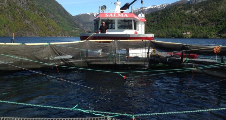 Researchers at the Institute of Marine Research invented a sliding cage to test how salmon can tolerate strong currents and how they behave. Photo: IMR.