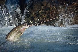 Fly fishers have had little success on the River Awe, a fact lobbyists blame on salmon farming. Photo: Internet