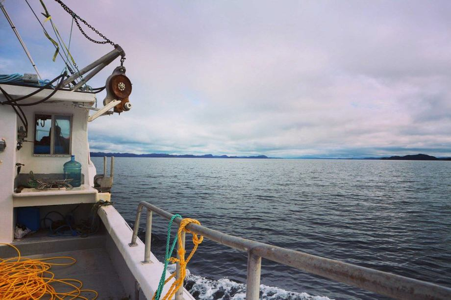Grieg is pressing ahead with its plans for a substantial salmon farming project in Placentia Bay, Newfoundland. Photo: GriegNL