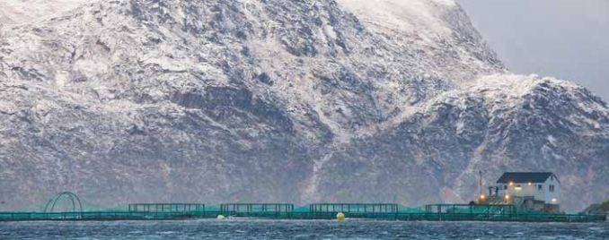 One of Greig Seafood's Finnmark salmon sites.