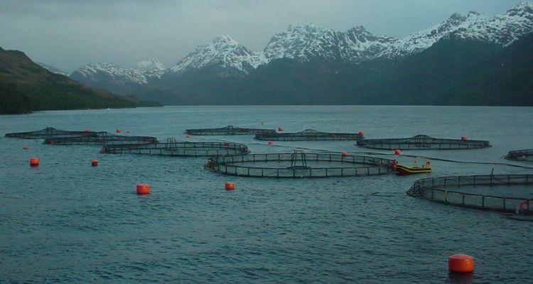 La región de Magallanes está siendo el foco de crecimiento productivo del salmón chileno. Foto: Archivo Salmonexpert.