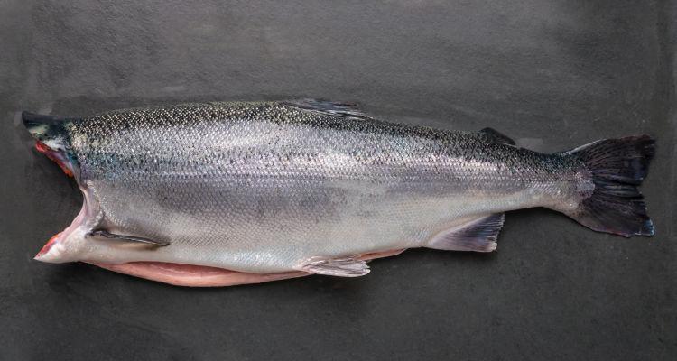 Silverside Premium Pacific Salmon is