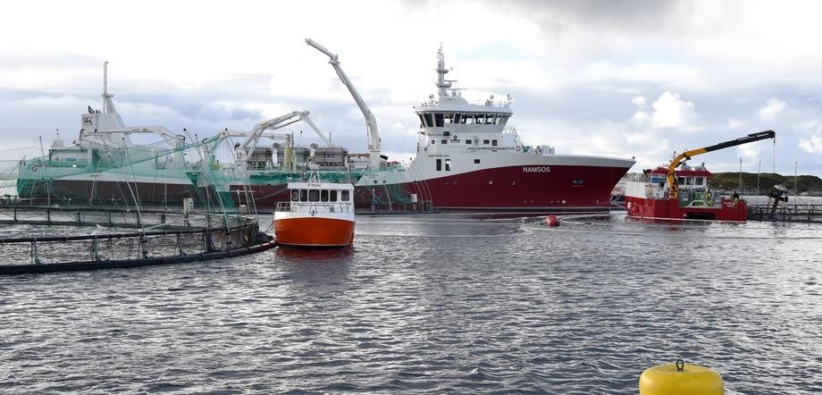 Foto: Norsk Fisketransport.
