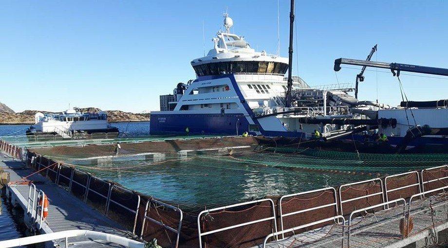 Badbehandlingene mot lakselus blir stadig færre. Illustrasjonsfoto: Langøy Fiskeoppdrett.