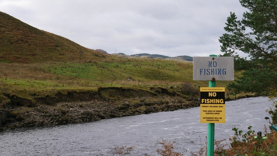 The number of wild salmon returning to Scotland's rivers has declined. Photo: FFE