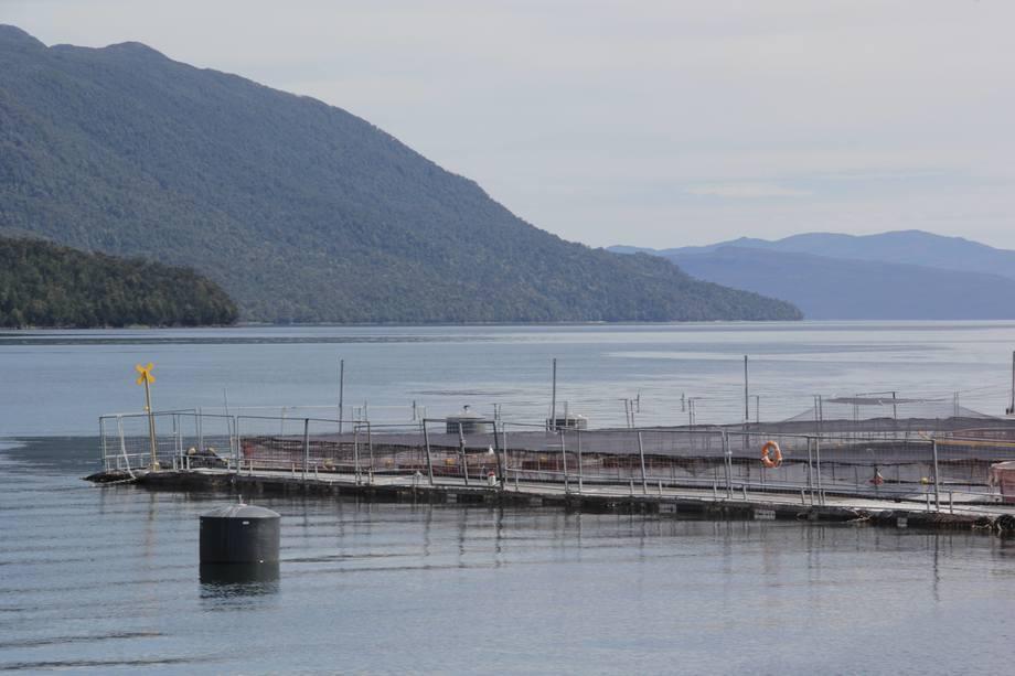 Centro de cultivo en Aysén. Imagen: Daniella Balin, Salmonexpert.