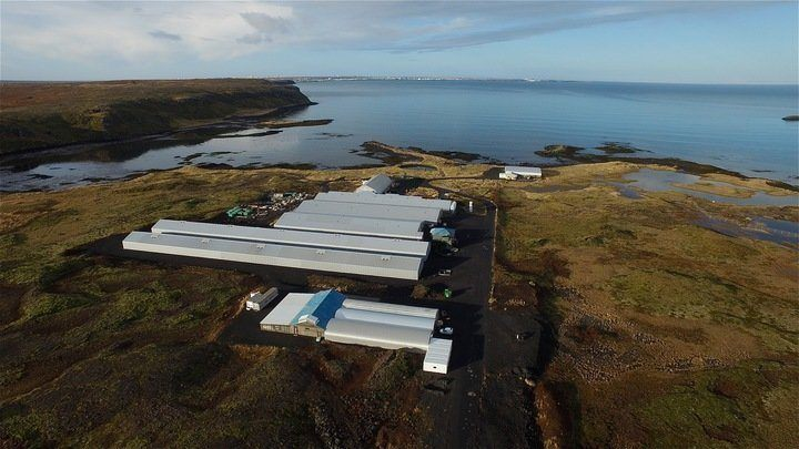 Biosecurity at StofnFiskur's land-based brood facility helped the firm retain permission to export to Chile. Photo: StofnFiskur