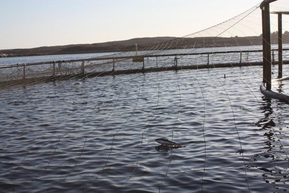 Illustrasjonsfoto. Foto: Måsøval Fiskeoppdrett.