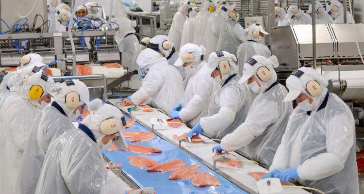 Produksjon av laksefilet i Chile.  Foto: Arkivfoto