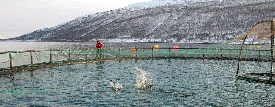 Nofima utvikler også et årlig barometer eller tilstandsrapport som skal fortelle hvordan det står til med bærekraften i den norske havbruksnæringen, er under utvikling. Foto: Frank Gregersen/Nofima