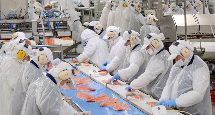Processing plant workers are losing their jobs because of lower fish production. Reference image: Blumar.