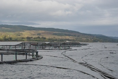More than 80% of salmon farms were rated excellent or good by SEPA, but compliance levels fell.