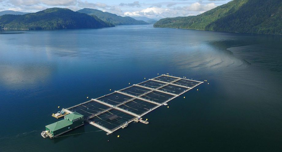 A Marine Harvest farm in British Columbia. Some BC farms are facing demands for closure by First Nations. Photo: Marine Harvest