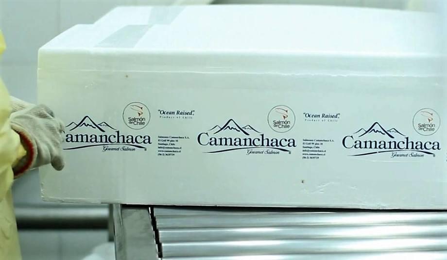 DNB Market prevé que Salmones Camanchaca computará un EBITDA por US$99 millones este año. Foto: Archivo Salmonexpert.