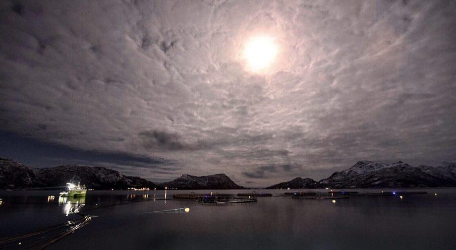 Lokaliteten Korsnes i Lofoten har ved flere anledninger lagt over lusegrensen, og skal nå i gang med å slakte ut lokaliteten. Foto: Ellingsen Seafood.