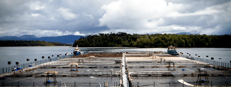 Imagen referencial de centro de cultivo. Foto: Friosur.